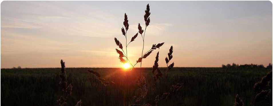 Die Sonne scheint durch die Gräser